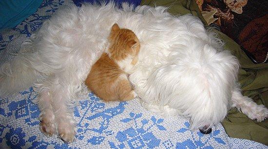 Ваша кошка и.... 430870ec4878