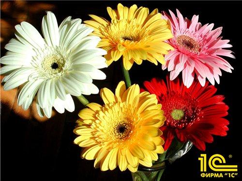 15 марта Марию поздравляем с Днем рождения 64a0adcc984a