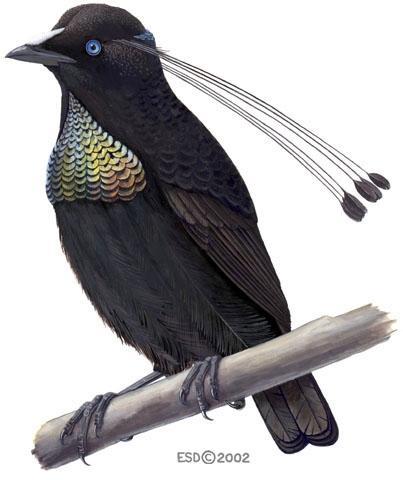 A 2 انواع نادرة من الطيور  F8693a4484a0