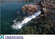 Ремень-рыба 2749a1a2af5dt