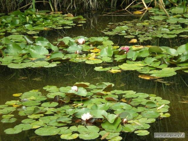 Крым. Никитский ботанический сад. 7824973ca8a0