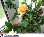 Тамарин хвастик - Страница 2 629a173d91c4t
