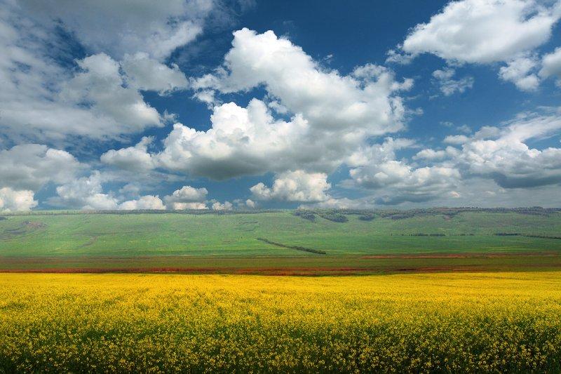 Медовое поле|Юг 0f11607ce20c