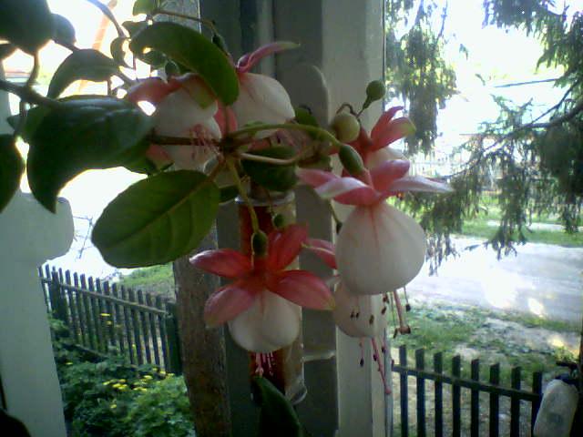Моё цветочное богатство - Страница 2 E918801dc80f