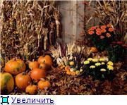 Наши домашние растения - Страница 2 043a9a55e738t