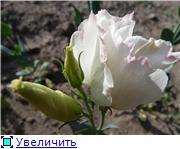 Хвасталка, у кого чего выросло интересного ;)  22067777bd6ft