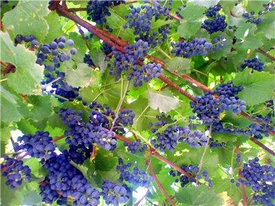 Что растет у нас в саду ? - Страница 17 B91c62175475