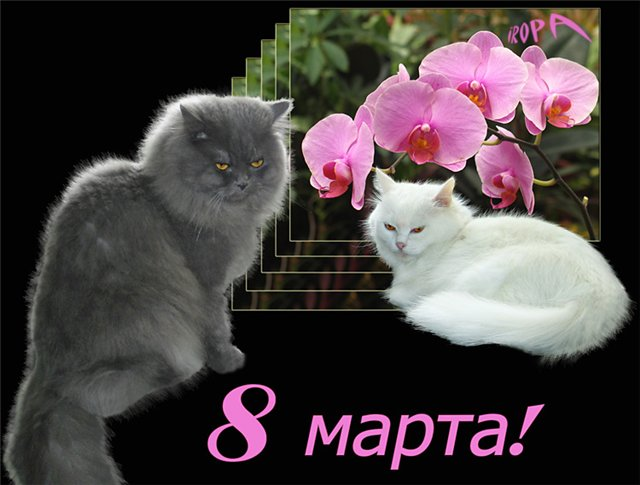 Дорогие оренмамочки, с 8 Марта!!!  915a6b76f690