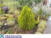 Cад Людмилы Ивановой из черкасс 15bbbe0b07a8t