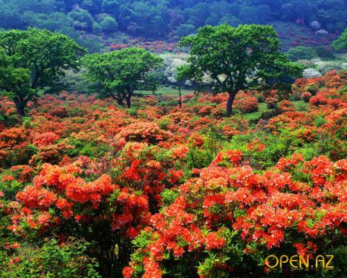 Красивые пейзажы Японии B24923dc9adb