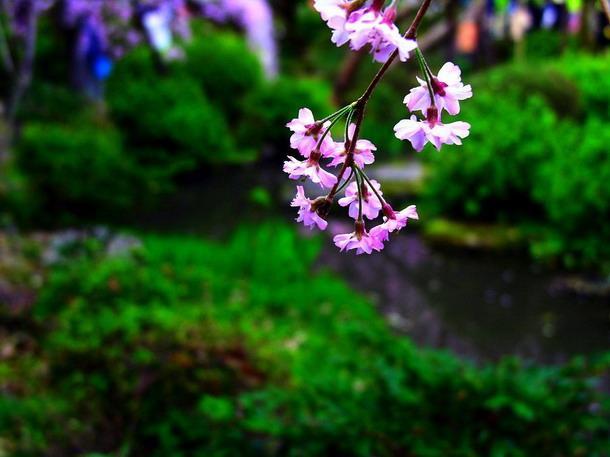 Красивые пейзажы Японии 8d446affd9f6