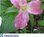 Растения для тени или Тенистый сад. Ec6585ec740dt
