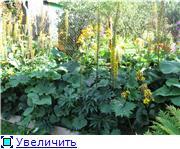 Растения для тени или Тенистый сад. E1d35e51fe9bt