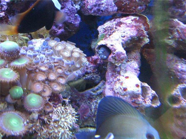 Фотографии аквариума 577594ff0ac2