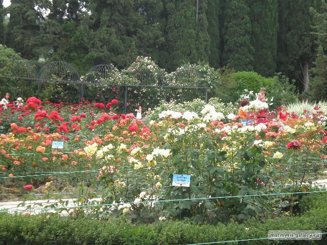 Крым. Никитский ботанический сад. - Страница 2 30baae7a8f0d