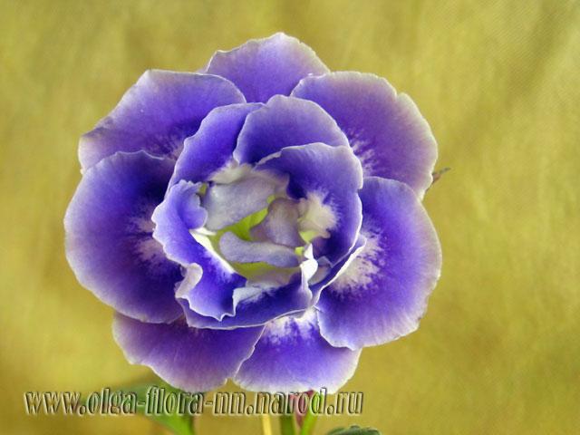 Merry Dancer (Treecolour) 388050836c8c