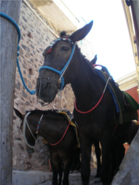 Санторини. Греция Eab6ea3899d8