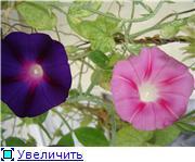 Рыськино СЧАСТЬЕ 6166e01c9ab6t