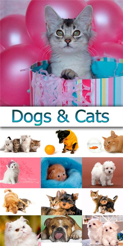 Dogs & Cats 146929ee5084