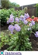 Лето в наших садах - Страница 7 D0d8454cdfe5t