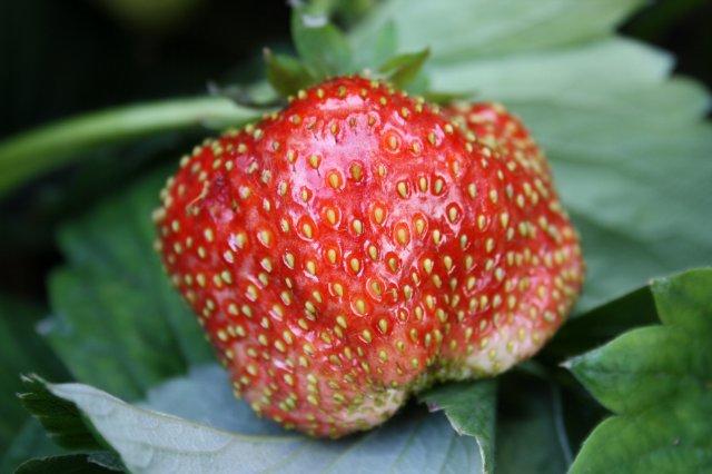 Растения от FILIGERa - Страница 2 B5219751ecfd