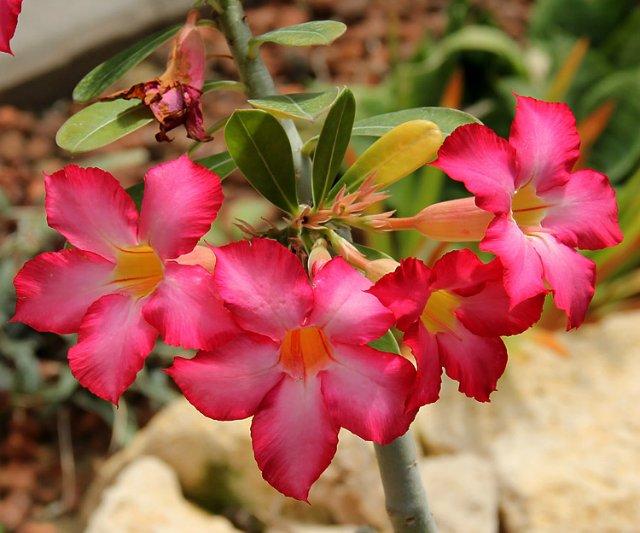 Экскурсия по Ботаническому Саду 59a6e067541e