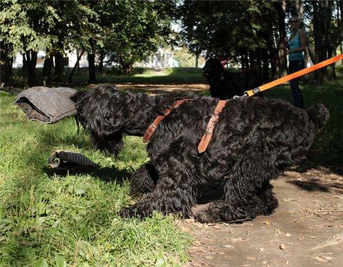 Дрессплощадка в Севастопольском парке в Минске 9ea19298e6c3