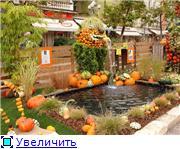Наши домашние растения - Страница 2 30f7166fbe09t