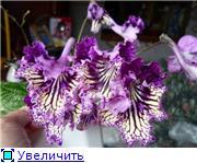 Семена глоксиний и стрептокарпусов почтой - Страница 2 D5601294be7ct