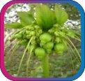 продам семена экзотических растений - Страница 3 5cac65548cfd