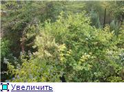 Cад Людмилы Ивановой из черкасс 00fb0148aee0t