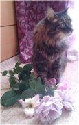 Кошки из бамбука и акрила - Страница 4 4509936fbdbdt