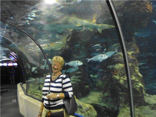 Десять популярных аквариумов мира 9464c9f531df