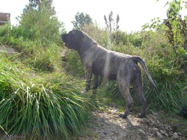 Наши собаки, друзья и гости, кот Мензурка 81321804692a