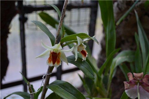 Выставка орхидей Никитского ботанического сада 0ecc9013b13b