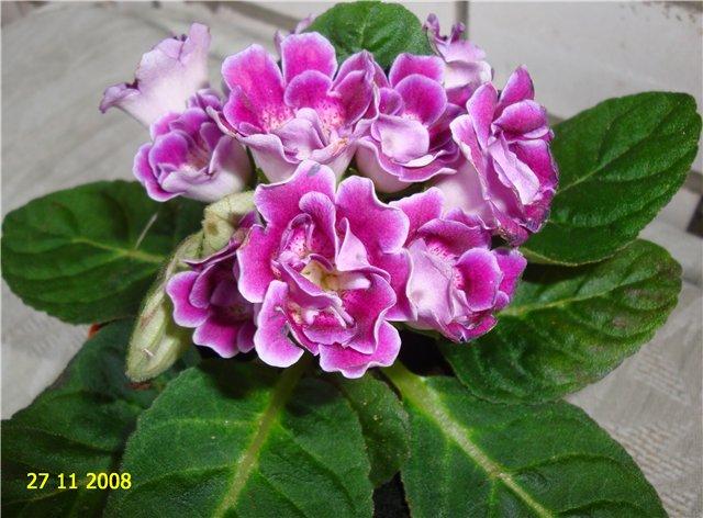 мои любимые цветочки F87dd1ee1029