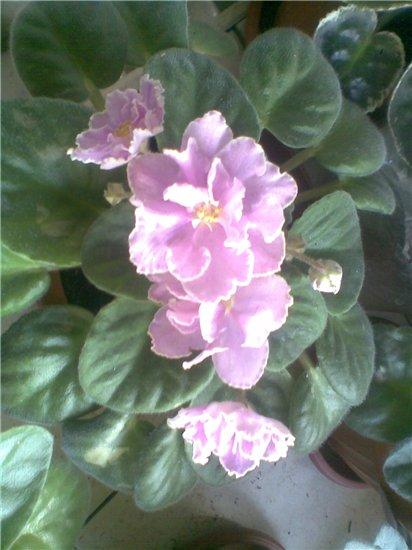 Camelot Pink Cc355efa897a