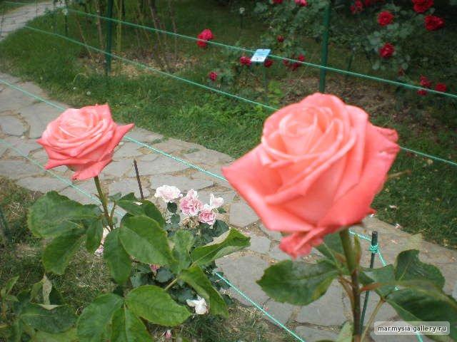 Крым. Никитский ботанический сад. 507324c9bc90