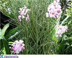 Парк орхидей в Ботаническом саду Сингапура. 229e6a70d664t