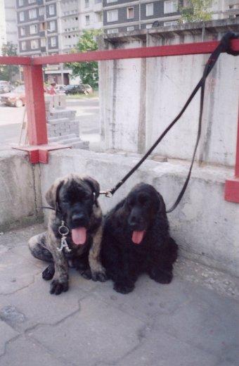 Наши собаки, друзья и гости, кот Мензурка - Страница 33 5dd6c6f0b739