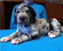 Очень красивые щенки, по низким ценам. 1b165d7c595bt