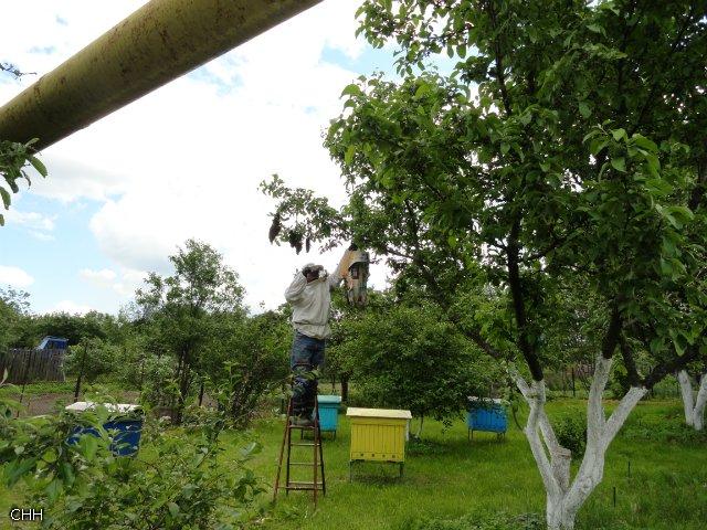 Пчеловоды есть? Всё о пчеловодстве 9f7a9c3b9fed