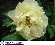 Колорлайн, розы 2013. 6d857b8b9c73t