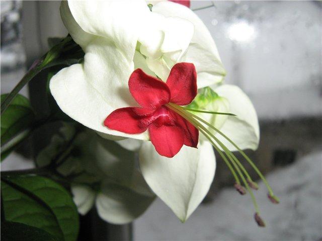 Моё цветочное богатство - Страница 19 84b6948fbf46