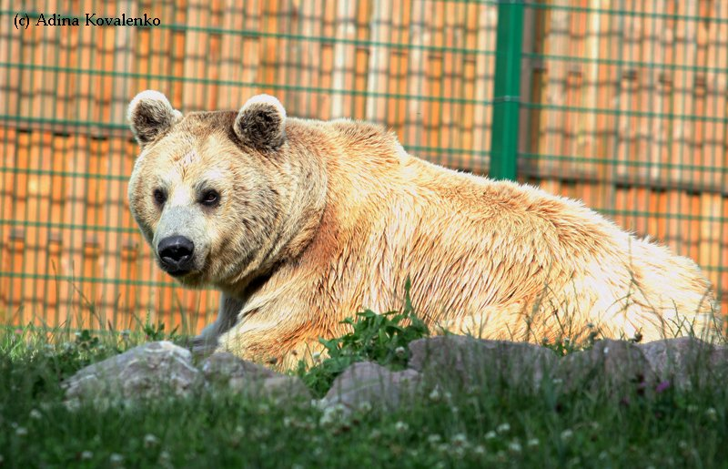 Швейцарский зоопарк 9ffe7b790046