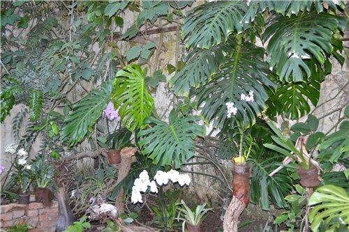 Выставка орхидей Никитского ботанического сада 70fd23485eb7