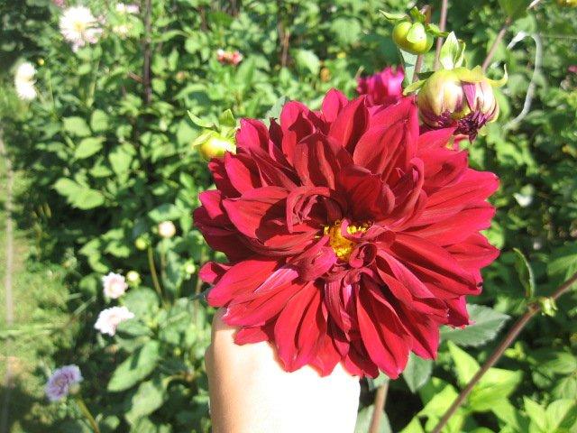 Во саду ли, в огороде... - Страница 6 13c75ca522b1