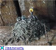 Птичий двор 9f196e44ce92t