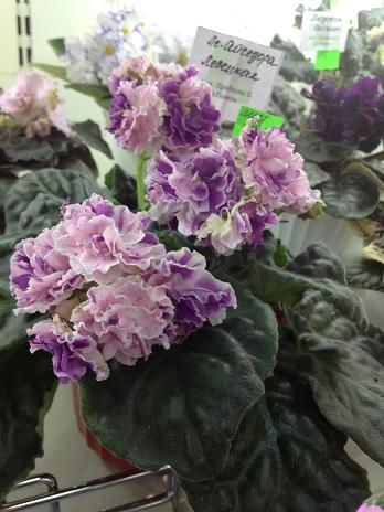 Выставка цветов - Страница 2 52473ec16219