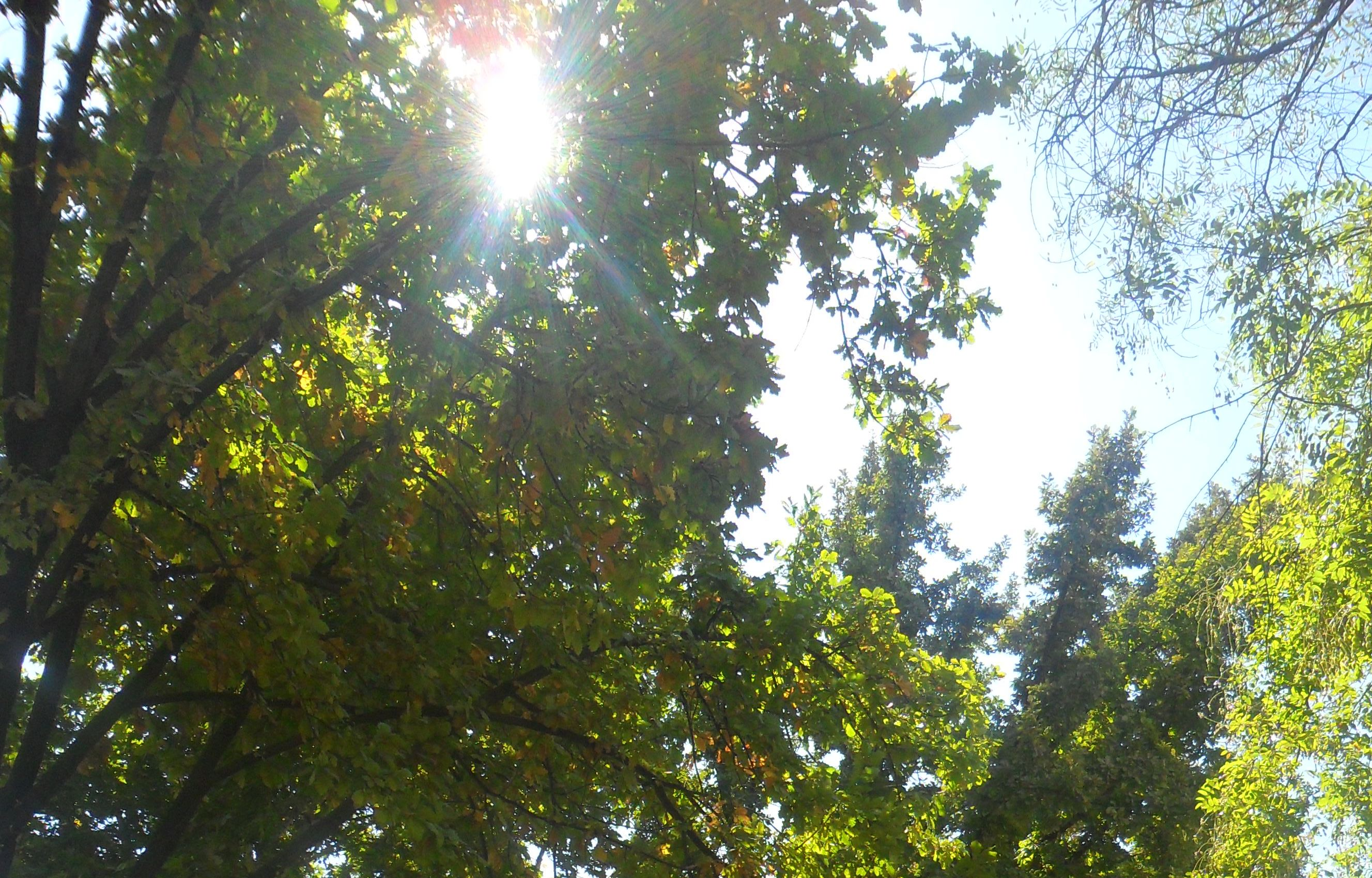 Фото конкурс: Осень в моем городе  E34585a128b8